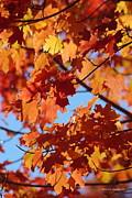 Tannis  Baldwin - Autumn Red