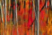 Andrea Kollo - Autumn Reds