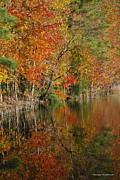 Tannis  Baldwin - Autumn Reflection 1