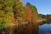 Tannis  Baldwin - Autumn Reflection 3