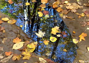 Andrea Kollo - Autumn Reflection