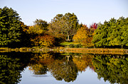 Reflection Of Trees In Lake Prints - Autumn Reflection in the Garden Print by Julie Palencia
