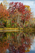 Lakes Digital Art - Autumn Reflection Landscape by Christina Rollo