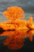 Karen Nitz - Autumn reflection...