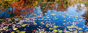 Lilly Pad Prints - Autumn Reflections Print by Bill  Wakeley