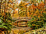 Outdoor Canopy Posters - Autumn Reflections Poster by Darren Fisher