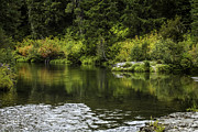 Green Foliage Prints - Autumn Reflections Print by Diane Schuster