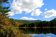 Foliage In White Mountains Posters - Autumn Reflections  Poster by Eunice Miller