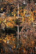 Yellow Leaves Framed Prints - Autumn Reflections Framed Print by John Rizzuto