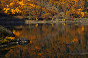 Fall Leaves Prints - Autumn Reflections Print by Mike  Dawson