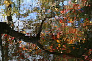 Nature Photography Posters - Autumn Reflections Poster by Neal  Eslinger