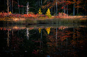 Calm Waters Posters - Autumn Reflections - Red Eagle Pond Poster by Thomas Schoeller