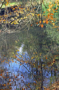Tony Murtagh - Autumn Reflections
