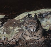 Bobcats Prints - Autumn Rest Print by Pat Gilmore