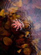Fall Art - Autumn Ripples by Mike Reid