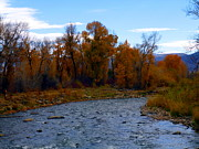 Cutthroat Trout Photo Prints - Autumn River Print by Jackie Carpenter