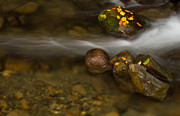 Macro Work - Autumn river by Mircea Costina Photography