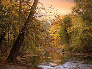 Autumn Landscape Digital Art - Autumn Riverbank by Jessica Jenney