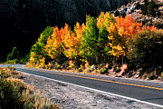 Fall Colors Photos - Autumn Road by Aron Kearney Photography