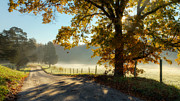 Fog Mist Posters - Autumn Road Poster by Bill  Wakeley