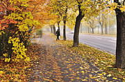 Foliage Pyrography Posters - Autumn road Poster by Conny Sjostrom