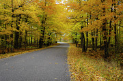 Bliss Michigan Prints - Autumn Road Print by Hans Castleberg