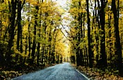 Tree Leaf Digital Art Posters - Autumn Road Poster by Michelle Calkins