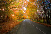 Rural Landscapes Photos - Autumn Roads by Mark Richards