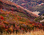 Incline Photo Posters - Autumn Poster by Rona Black