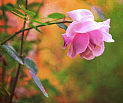Survival Acrylic Prints - Autumn Rose Acrylic Print by Theresa Tahara