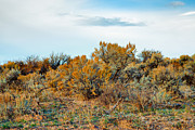 Kittitas Valley Prints - Autumn Sage - October 2013 Print by Steve G Bisig