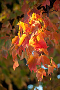 Autumn Foliage Photos - Autumn by Sebastian Musial