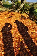 Fallen Leafs Photos - Autumn Shadows by  Terrie Heslop