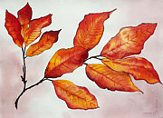 Sienna Drawings Prints - Autumn Print by Shannan Peters