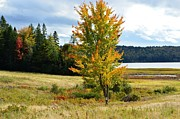 Town Of Franklin Metal Prints - Autumn Shores of Maine Metal Print by Lena Hatch