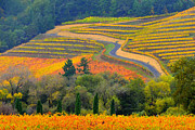 Sonoma County Digital Art Prints - Autumn Showing Off Print by Antonia Citrino