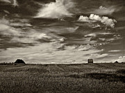 Bale Metal Prints - Autumn Sky bw Metal Print by Steve Harrington