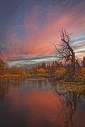 Mitch Shindelbower - Autumn Sky