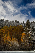 Winter Storm Prints - Autumn Snow Print by Mitch Shindelbower