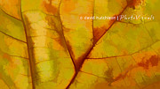 David Hutchison - Autumn Soft