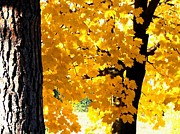 Backlit Digital Art Prints - Autumn Splendor 2 Print by Will Borden