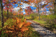Country Dirt Roads Metal Prints - Autumn Splendor Metal Print by Bill  Wakeley