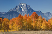 Grand Tetons Posters - Autumn Splendor In Grand Teton Poster by Sandra Bronstein