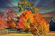 Judy Palkimas - Autumn Splendor