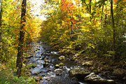 Gatlinburg Tennessee Prints - Autumn Splendor Print by Lena Auxier