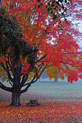 Faa Featured Metal Prints - Autumn Splendor Metal Print by Lisa  Phillips