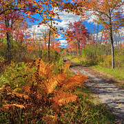 Dirt Roads Photos - Autumn Splendor Square by Bill  Wakeley