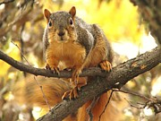 Lori Frisch - Autumn Squirrel