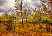 Storm Greeting Cards Framed Prints - Autumn Storm at Dolly Sods West Virginia I Framed Print by Dan Carmichael