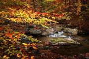 Rural Landscapes Metal Prints - Autumn Stream Metal Print by Bill  Wakeley